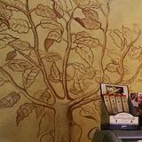 albero cacao